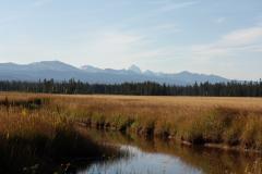 The Teton Range rises above the Bechler Meadows.