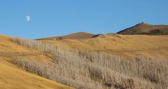 Mt Washburn